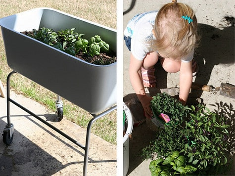 Wonderful A Portable Herb Garden U0026 How To Pick Basil