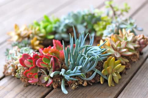 DIY Succulent Wreath Tutorial