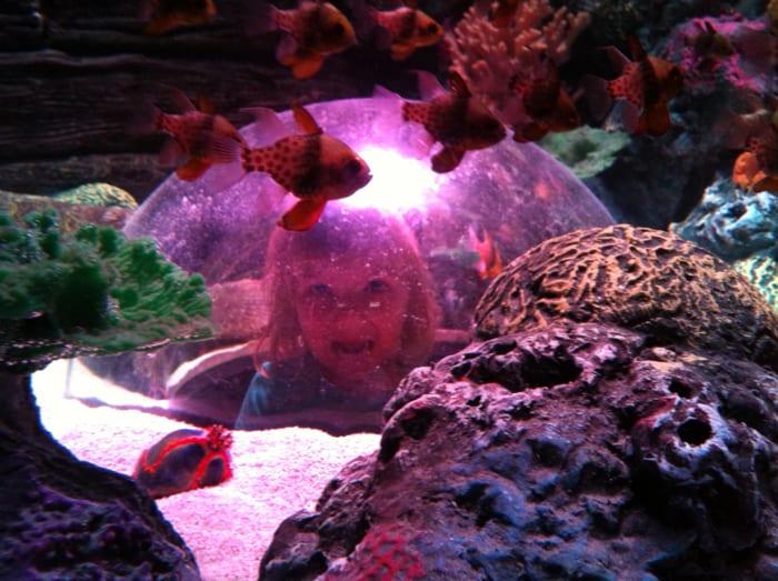 bubblehead at sealife aquarium