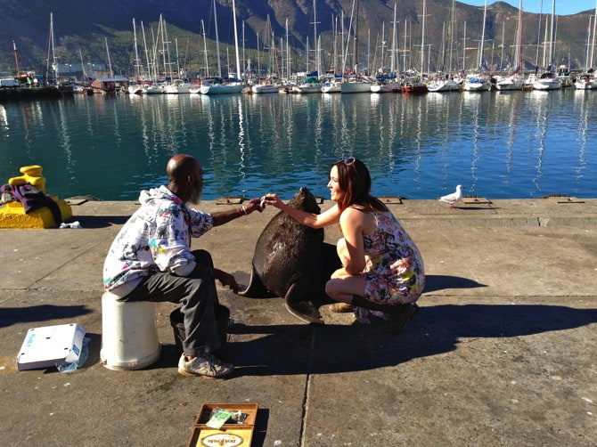 houts bay chippy the seal