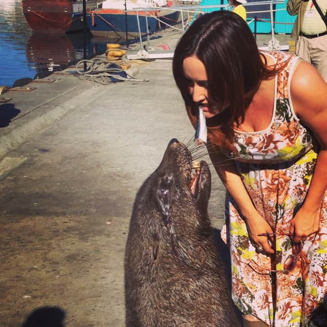 houts bay chippy the seal feeding