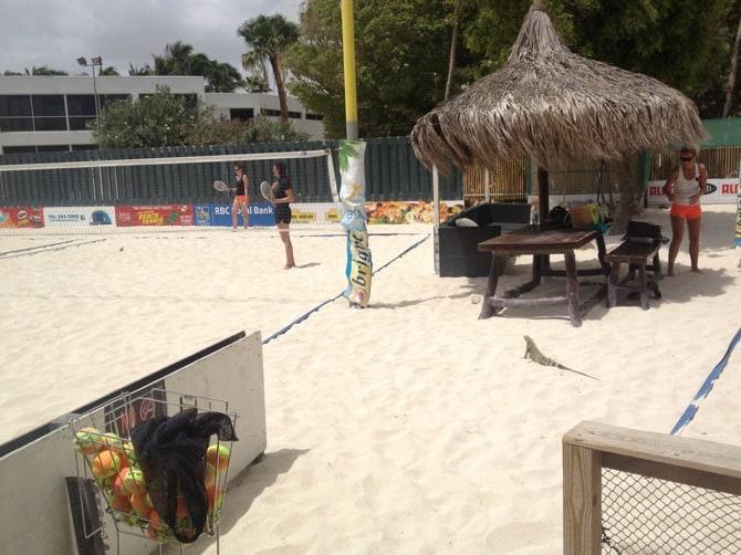 aruba beach tennis iguana