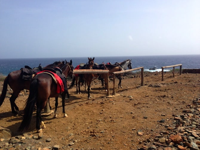 aruba horses north side