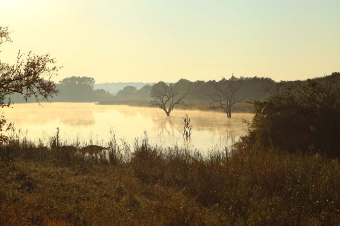 kapama safari sunrise