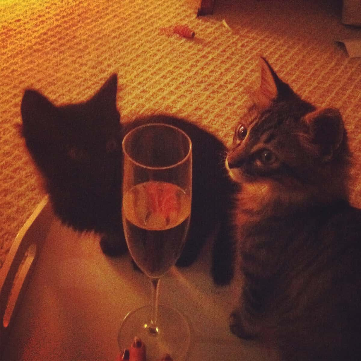 kittens & Champagne