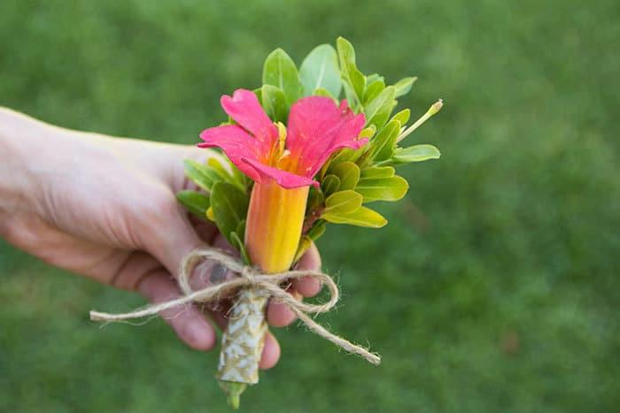 purse-flower-3