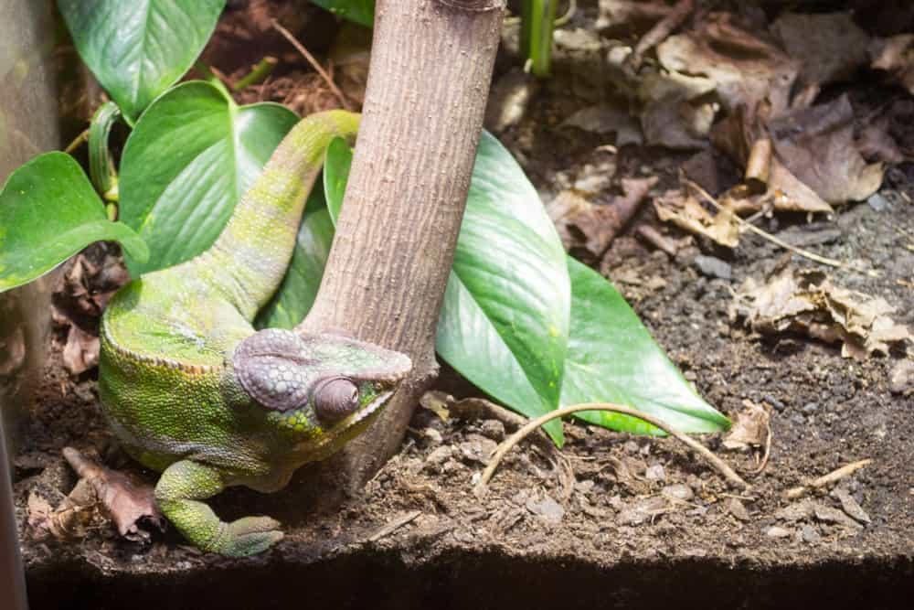 oslo reptil park
