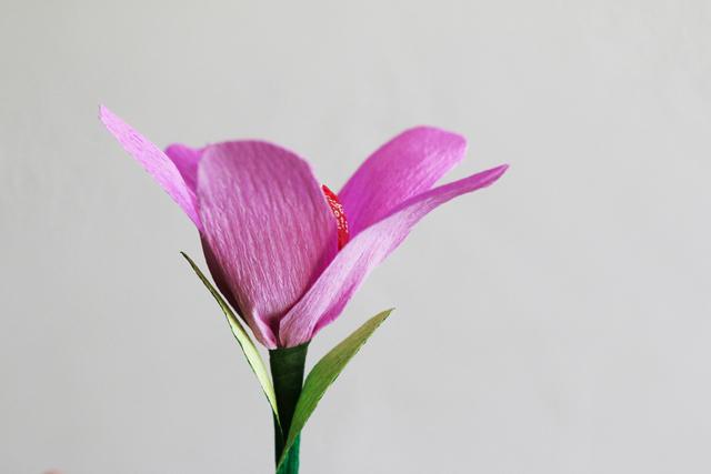 Valentine Lolli-Flowers