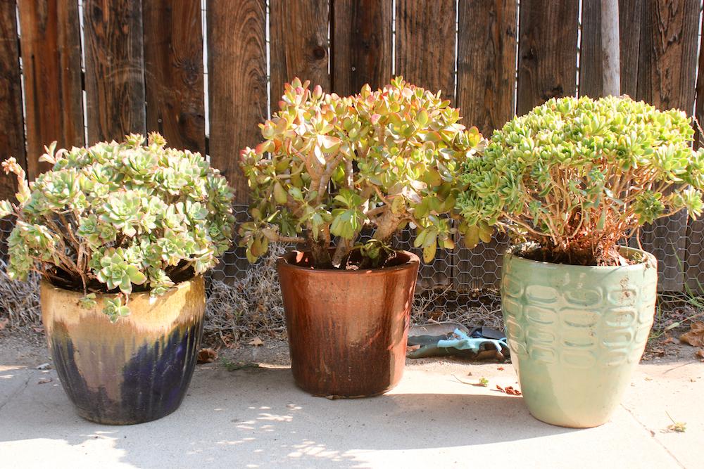 Potting Succulents