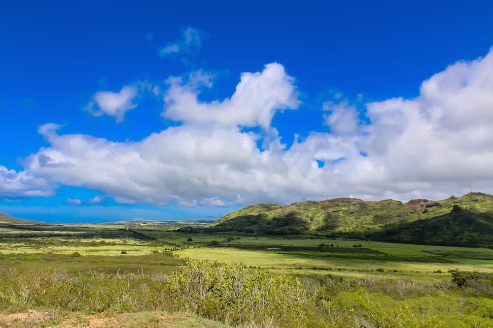 CJM Stables Kauai