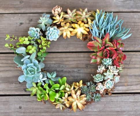 diy-succulent-wreath