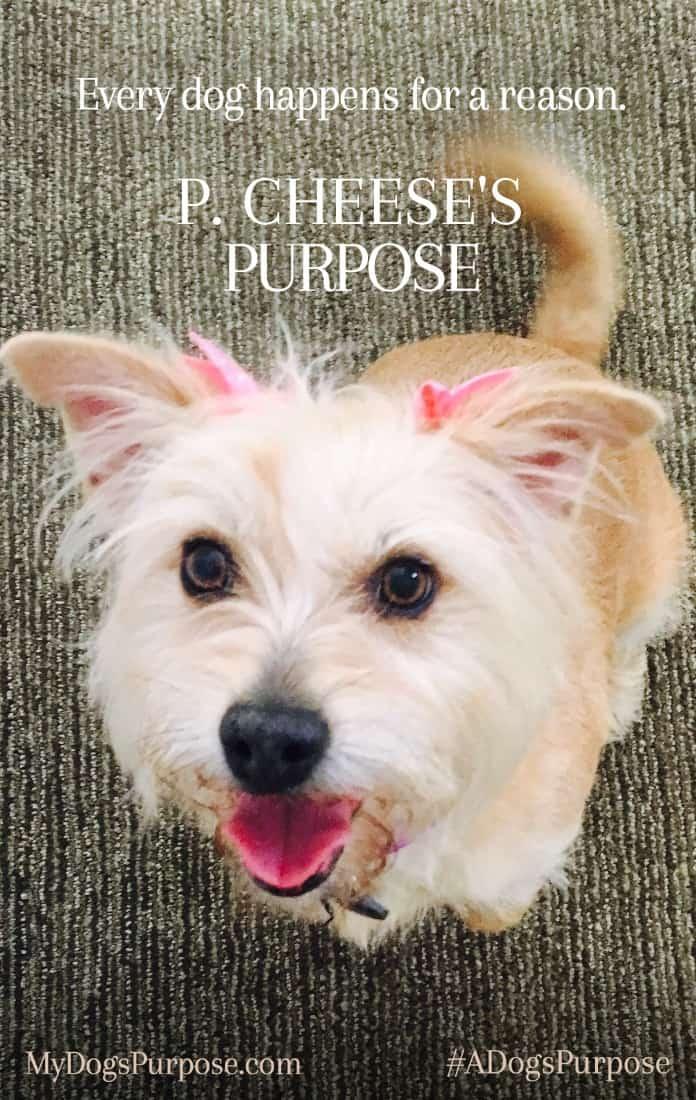 adogspurpose-poster