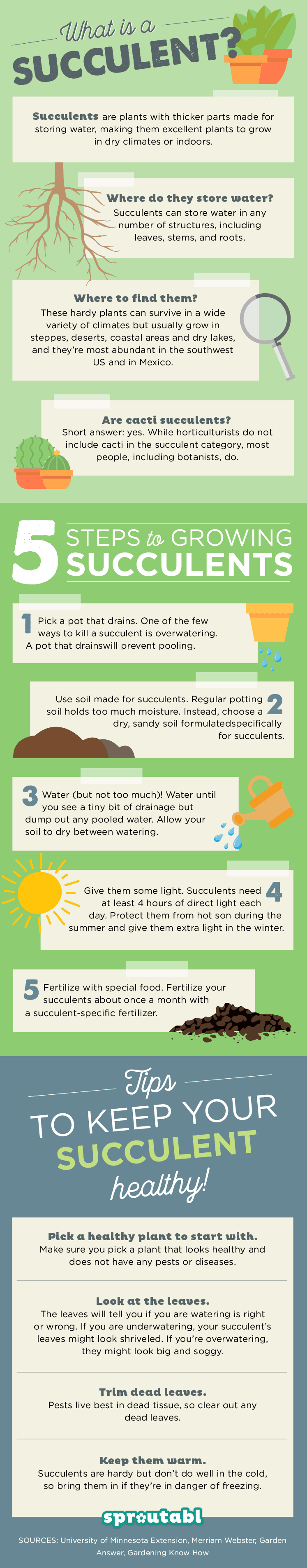 How-to-Grow-Succulents