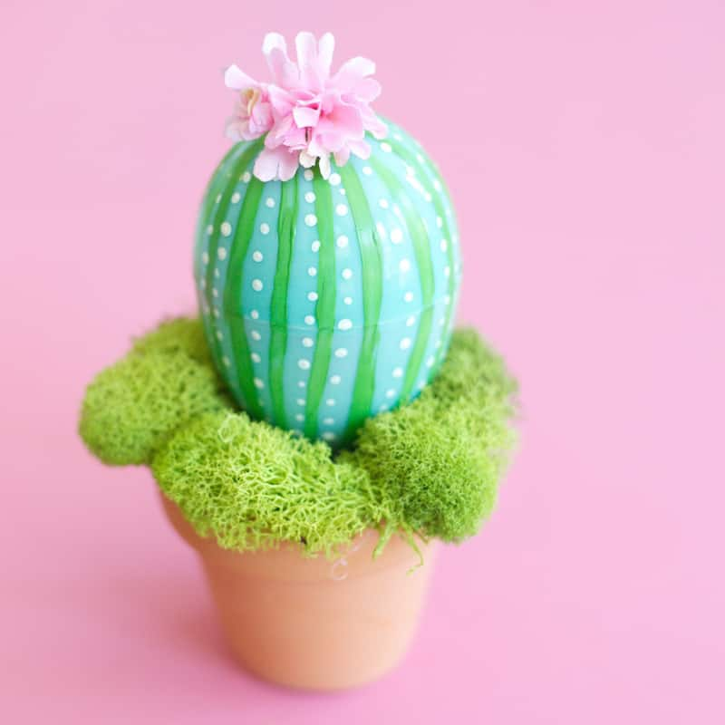 Potted Easter Egg Cactus