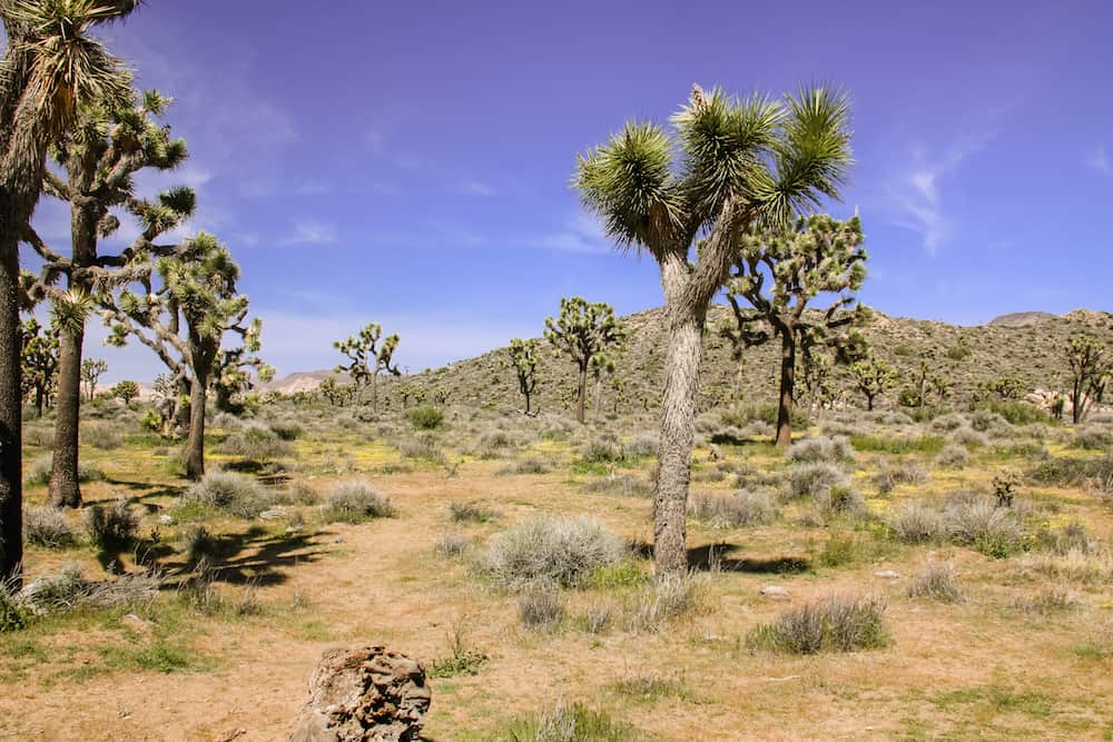 Joshua Tree National Park 10