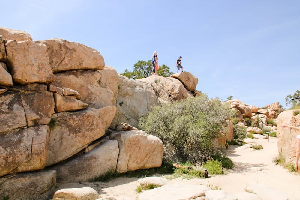 Joshua Tree National Park 3