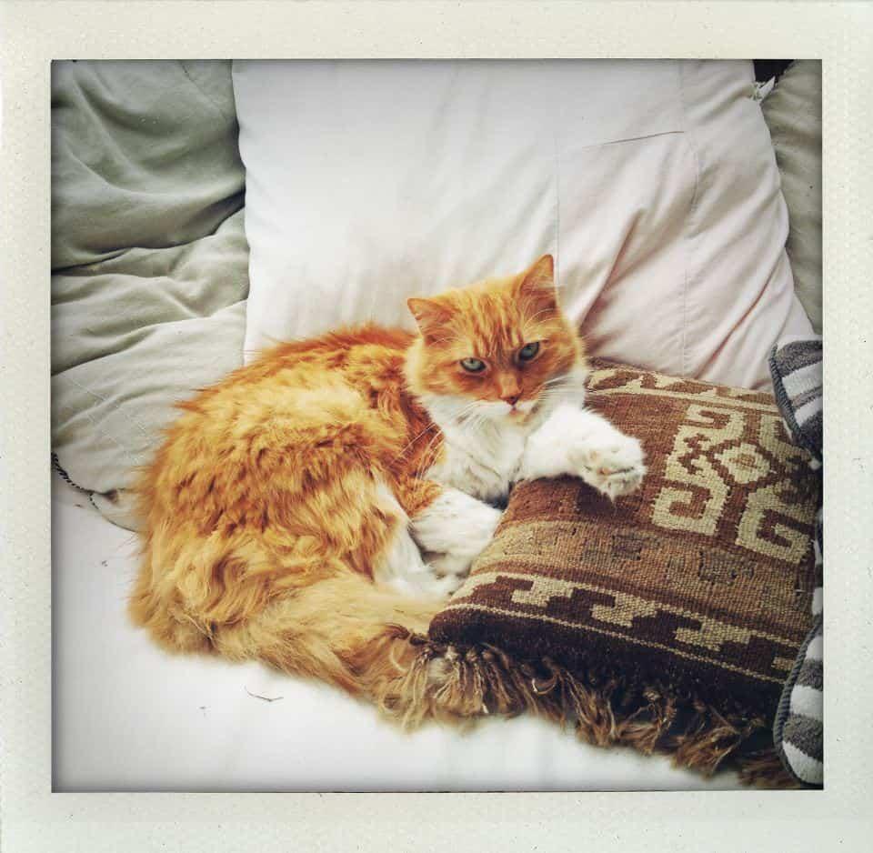 Hammy Cat