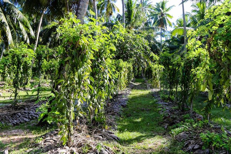 Seychelles Le Digue Vanilla Plantation