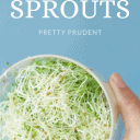 How to grow sprouts